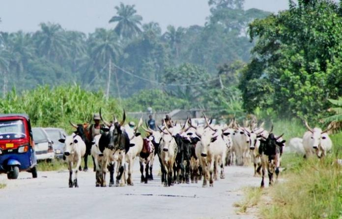 Rustling: 6,622 Cattle Recovered In 14 Months In Niger
