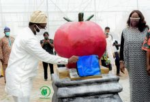 Photo of Osun State Government To Create 2000 Direct Jobs In The Agricultural Sector