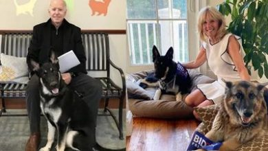 Photo of Joe Biden's dogs sent away from White House after 'biting incident'