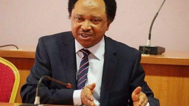 Photo of Sani: Buhari Is Distracting Nigerian's With Open Grazing